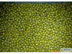 樊储求购大量绿豆 大豆 高粱